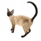 Międzynarodowa Wystawa Kotów Rasowych EKKR